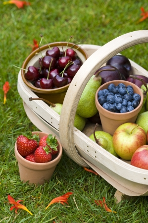 pick: trug of harvested summer fruit including  blueberries, cherries, apples, pears, strawberries, plums