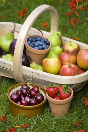 trug of harvested summer fruit including  blueberries, cherries, apples, pears, strawberries, plums