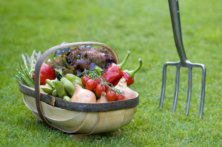 home grown: freshly harvested home grown vegetables in a wooden trug Stock Photo