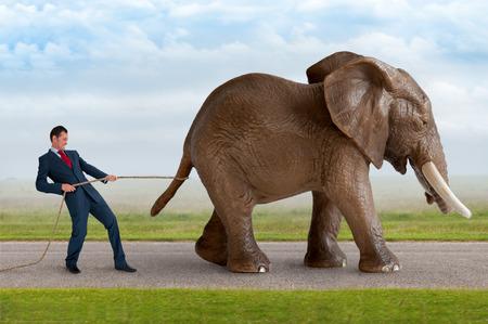 restrain: businessman trying to restrain an elephant