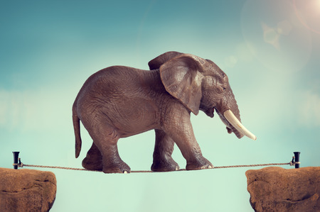Elefante en la cuerda floja Foto de archivo - 43698437