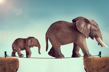 elefante: madre y el bebé elefante en la cuerda floja