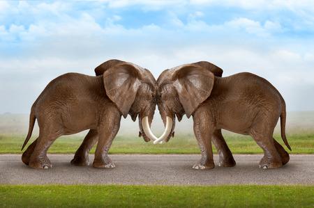 krachtmeting begrip olifanten duwen tegen elkaar Stockfoto