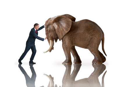 test of strength concept businessman pushing against an elephant 스톡 콘텐츠