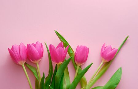 Netherland tulips on pink background topdown view with copyspace at left, holiday concept, love