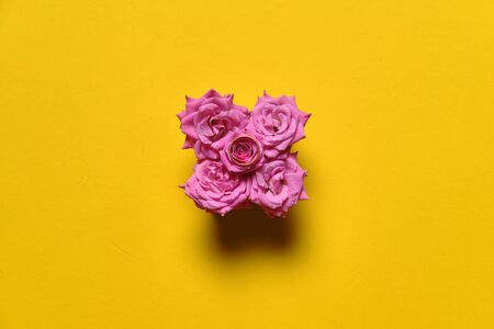 Flowers on plain yellow background, bloom composition 写真素材