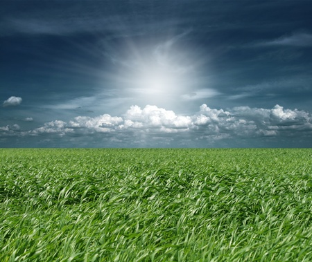 green grass and blue cloudly sky with sun Stock Photo - 8992827