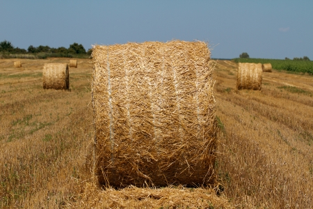 Hay bales in the countryside on a perfect sunny day photo