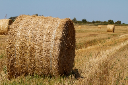 bail: Hay bales in the countryside on a perfect sunny day