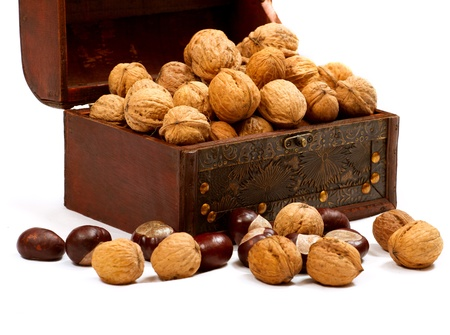 full willow: Chest with walnuts against white background