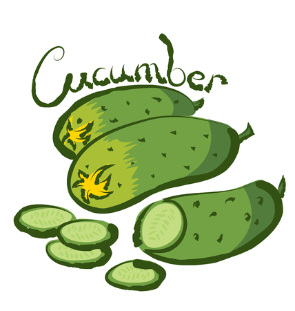 cucumber: vector cucumber with calligraphic inscription