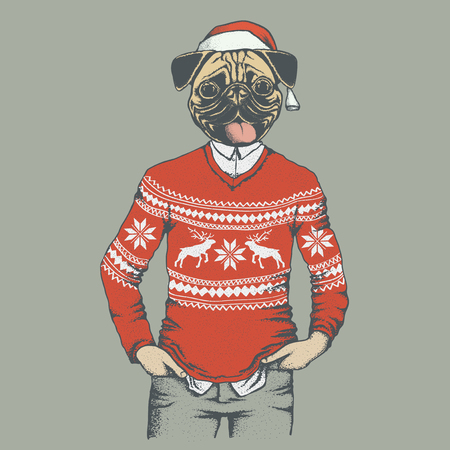 carlin: Christmas Pug dog vector illustration. Pug dog in human sweater or sweatshirt. Adorable Chinese pug dog on New Year