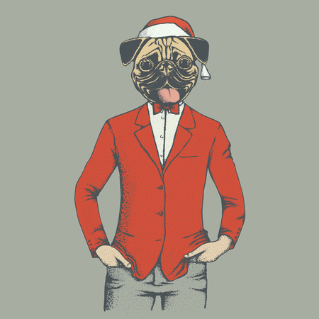 carlin: Christmas pug dog vector illustration. Pug dog in human suit and Santa hat. Adorable Chinese pug dog on New Year