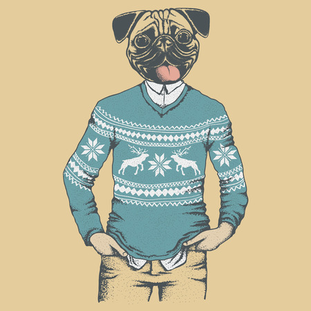 carlin: Pug dog vector illustration. Pug dog in human sweater or sweatshirt. Adorable Chinese pug dog vector character