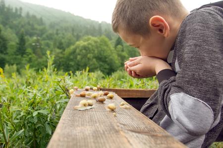 Glücklicher Junge und Gruppe von Schnecken auf dem Holzbrett. Wildes Leben von Schnecken in der Natur. Junge entdeckt die Natur Standard-Bild