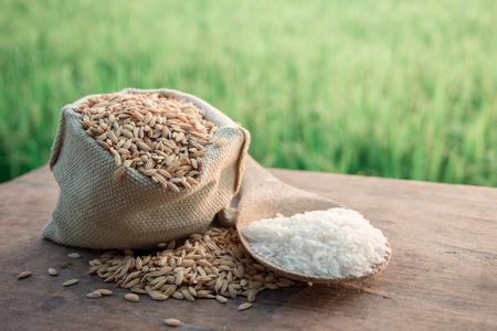 背景水稲と田んぼ。