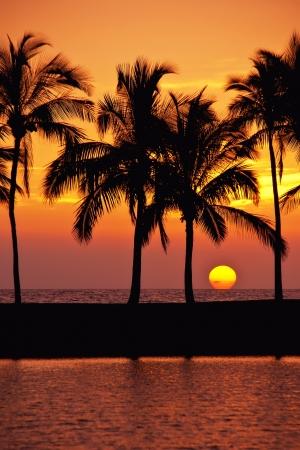 palm tree sunset: Hawaiian sunset on Big Island Anaehoomalu bay