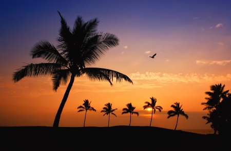 Hawaiian Sunset on Big Island Stock Photo - 14128107