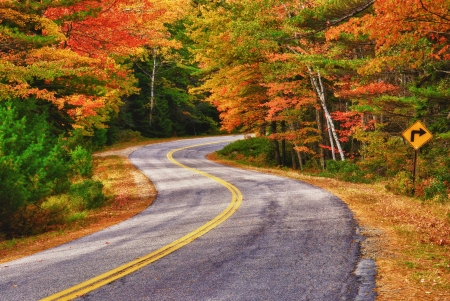 autumn landscape: A winding road curves through autumn trees in New England