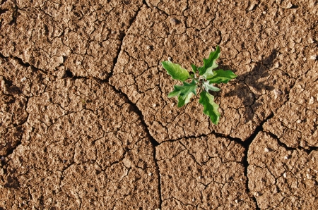 Drought cracked soil with lonely plant growing through  Banco de Imagens