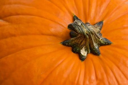 Pumpkin closeup detail Stock Photo - 15638149