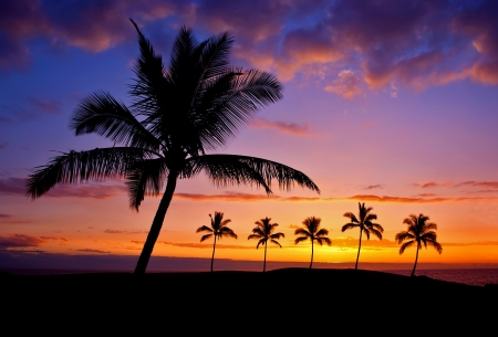 Hawaiian palm tree silhouette sunset on Big Island photo