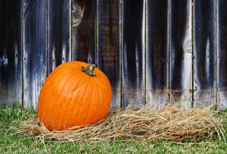 Single pumpkin on hay against wooden fence  Stock Photo