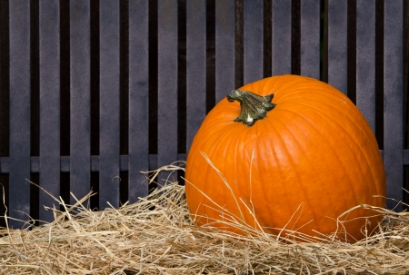 Single pumpkin on hay against iron texture Stock Photo - 15779996