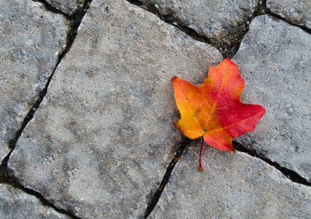 Colorful autumn leaf against stone texture Stock Photo - 16011402
