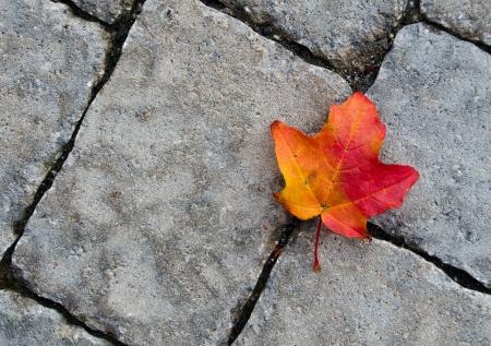Colorful autumn leaf against stone texture Stock Photo - 16011402