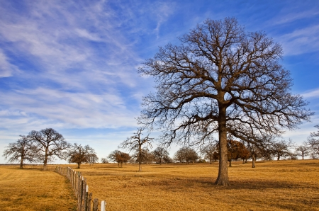 white winter: Texas winter sky over scenic trees on the pasture
