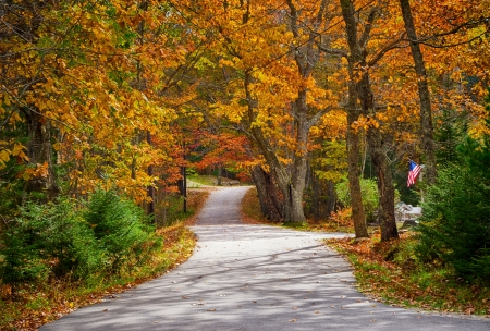autumn colour: Winding country road in autumn
