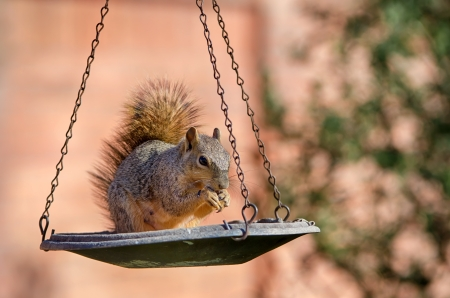 Squirrel eating seeds from a bird feeder photo
