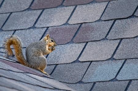 屋根の上に座ってリス 写真素材