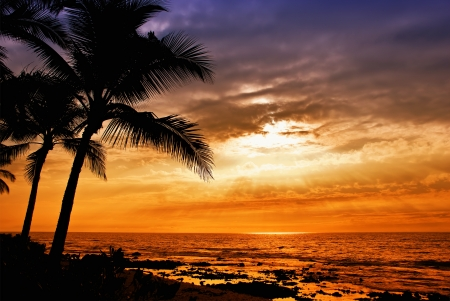 Hawaiian sunset with tropical palm tree silhouettes photo