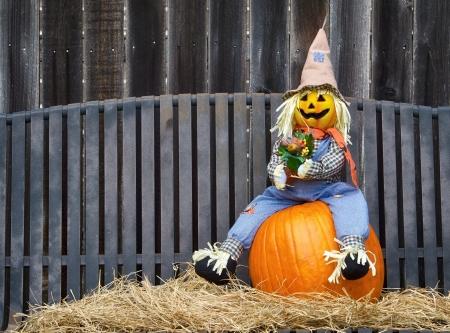 espantapajaros: Espantapájaros sentado en una calabaza y heno. Banco de hierro gris y de una valla de madera en el fondo.