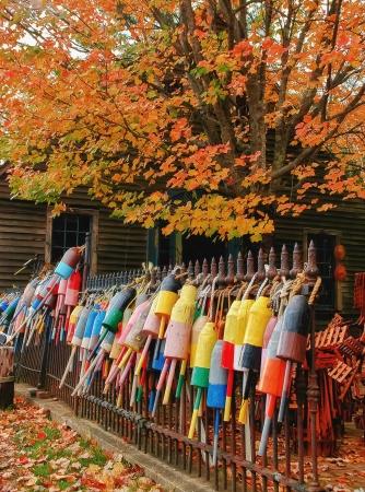 boyas: Boyas de la langosta en el oto�o de Maine