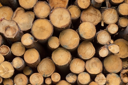 pile of logs: Pile of timber logs Stock Photo