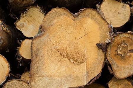 sawed: Pile of timber logs, closeup