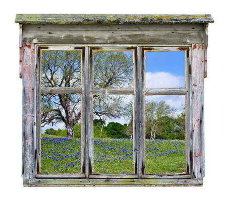 vista: Old rustic window frame with Texas bluebonnet country vista in spring, isolated  Stock Photo