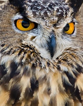 フクロウ (横痃子鹿 写真素材
