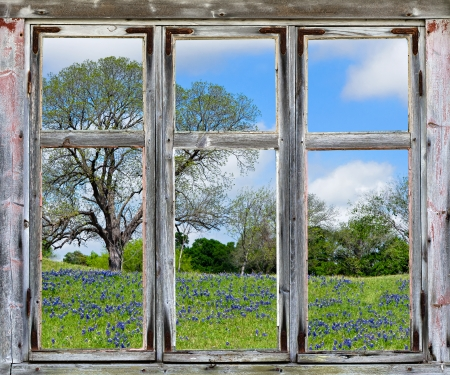 Country spring vista with Texas bluebonnets, seen through an old rustic window frame photo