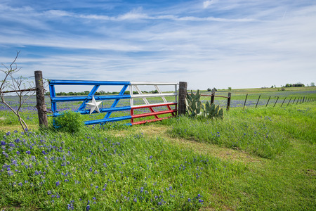 Bluebonnet field and a fence with gate along roadside in Texas spring photo