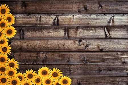 Wooden plank background with sunflowers border photo