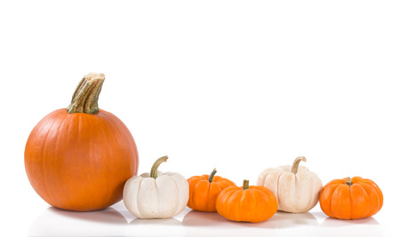 Pie pumpkin and mini pumpkins in a row against white background Stockfoto