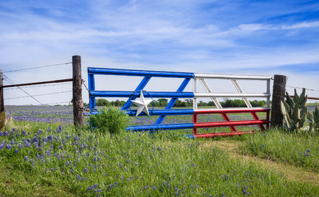 country landscape: Bluebonnet field and a fence with gate along roadside in Texas spring
