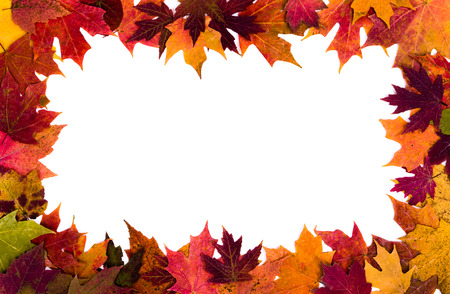 Colorful autumn leaves border on white background
