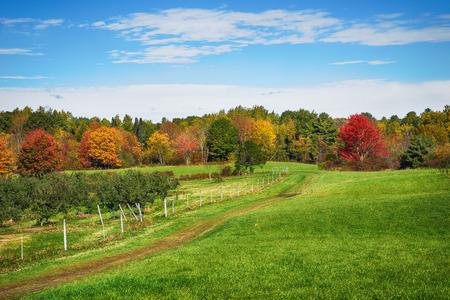 ニュー イングランド リンゴ園で秋の国の風景