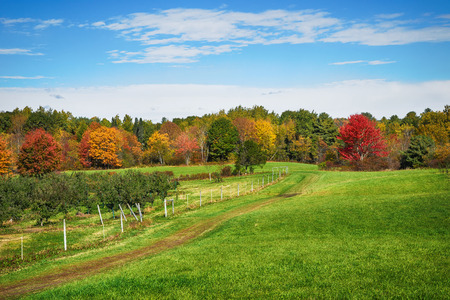 Autumn country landscape in New England apple orchard