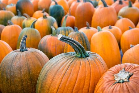 Autumn pumpkins at the pumpkin patch